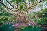 沖縄移住6年目の編集長がおすすめする観光スポット1選!!沖縄本島最北端の国頭村でハイキング!!やんばるの大自然を拝める「大石林山」は本当にコンテンツ力最強だった。