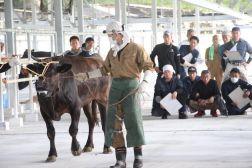 多くの人が知らない「牛の爪切り競技会」〜ツメを削って凌ぎも削る「牛削蹄競技大会@糸満市」リポート!〜